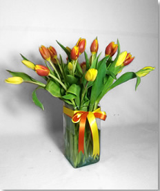 Tulipanes Calidez
