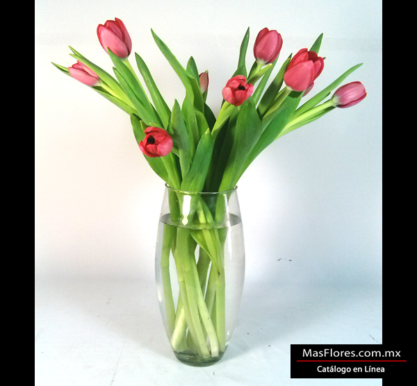 10 tulipanes holandeses color rojo